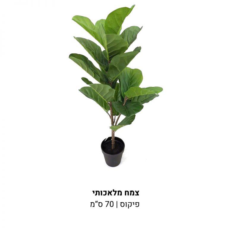 עמוד-מוצר-עציץ-פיקוס