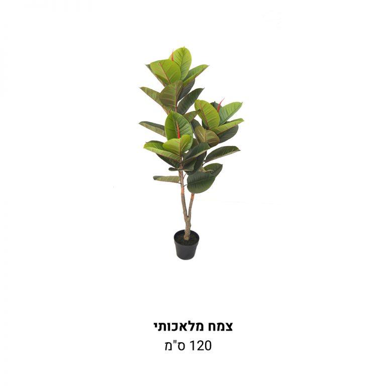 עמוד-מוצר-צמח